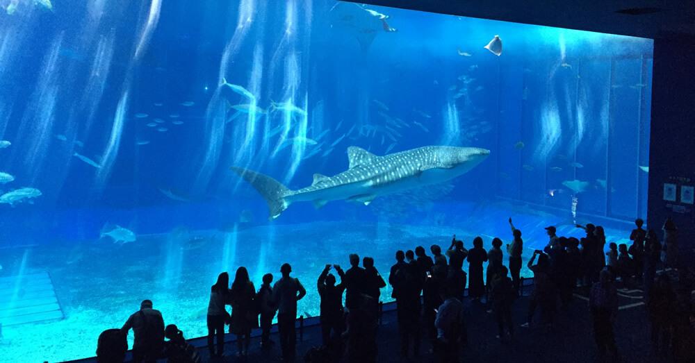 巨大水槽の中を回遊するジンベイザメ