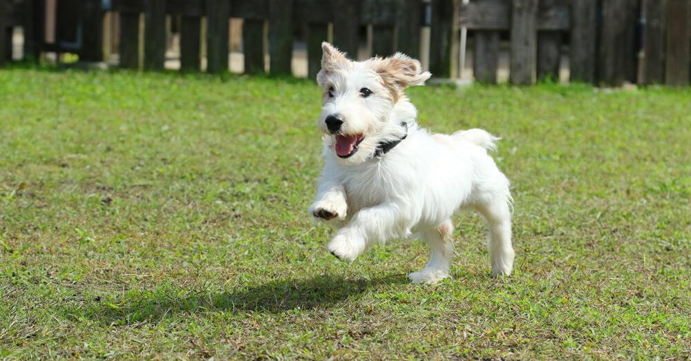 愛犬の運動スペースを注文住宅でつくる