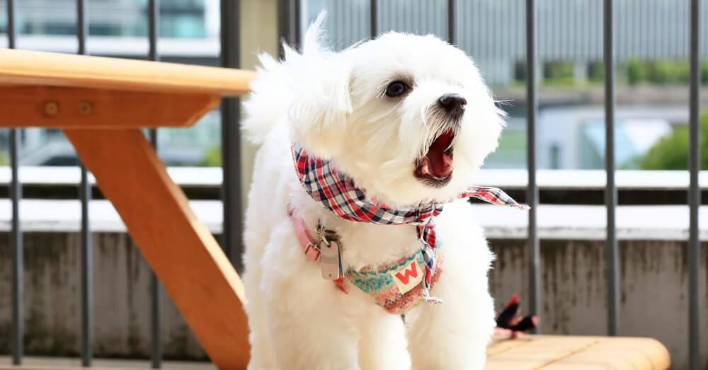吠える犬の写真