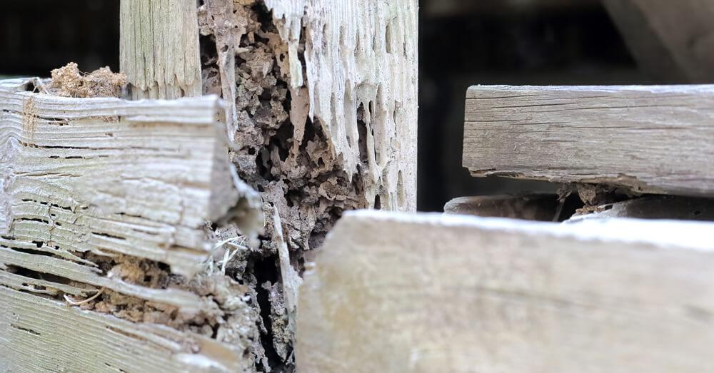 シロアリに浸食された柱