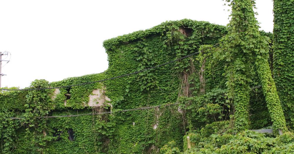 景観を損なう可能性のある空き家