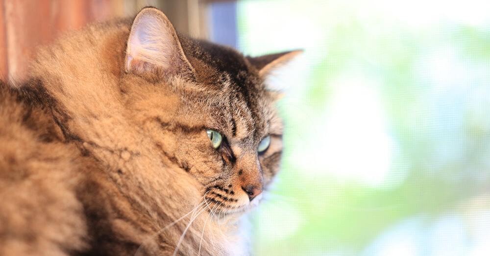 高所が好きな猫の安全対策リフォーム