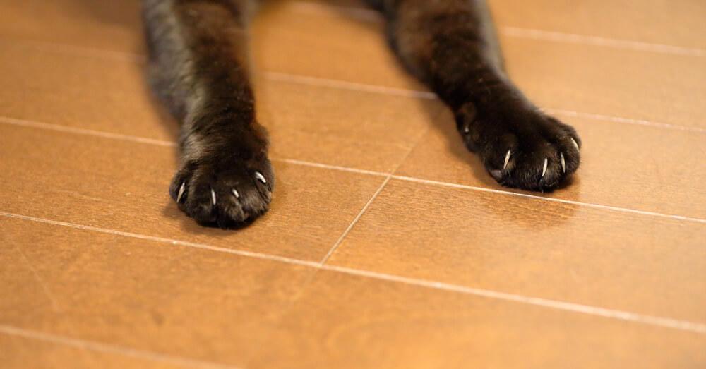 猫のための床リフォーム