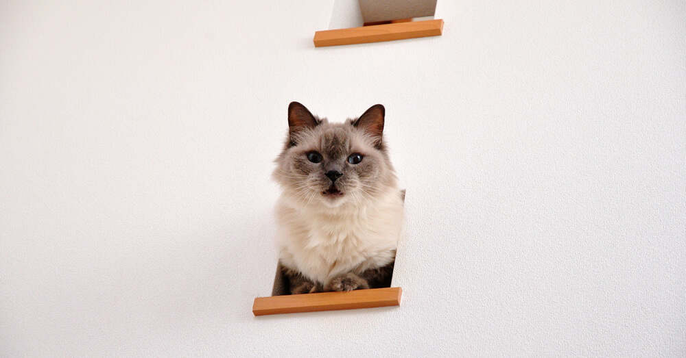猫のいる家の壁リフォーム