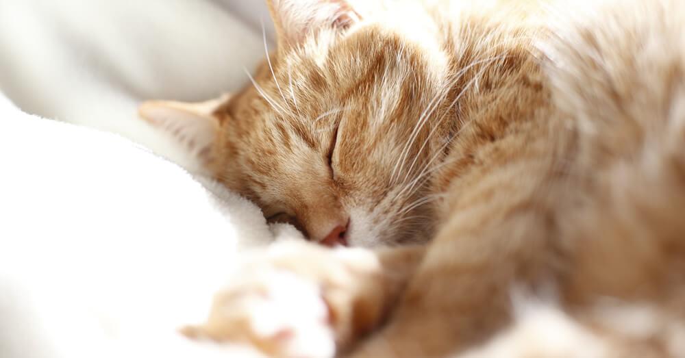 猫と暮らす家のリフォーム