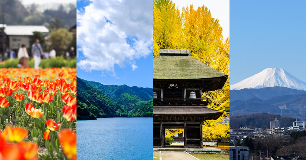 羽村市のチューリップ・夏の奥多摩湖・あきる野広徳寺の紅葉・冬の瑞穂町から見える富士山