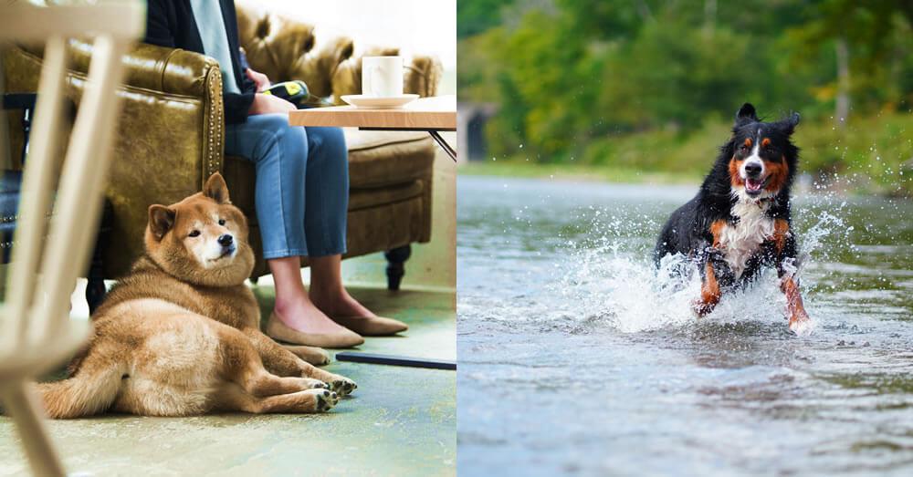 愛犬を連れていけるカフェや川で遊ぶ愛犬のイメージ