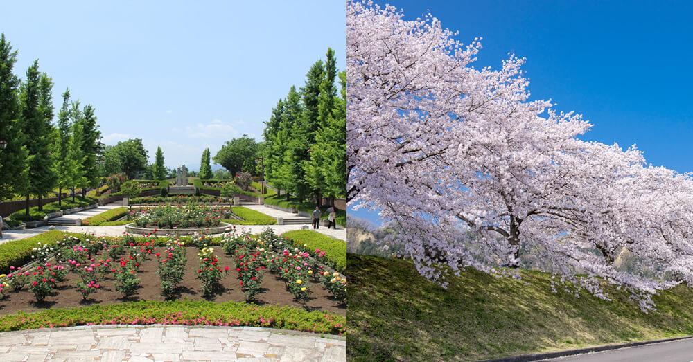 東京都あきる野市の秋留台公園/東京都羽村市の桜